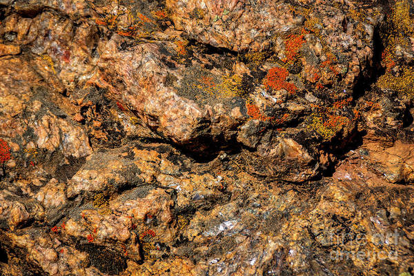 Photograph - Mica And Lichen On Rock by Janice Pariza