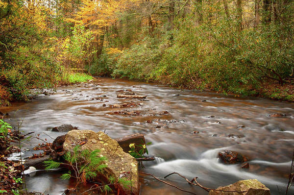 Photograph - Michaux Stream by Dan Urban