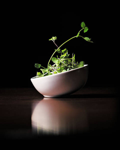 Photograph - Micro Greens by Jake Sorensen