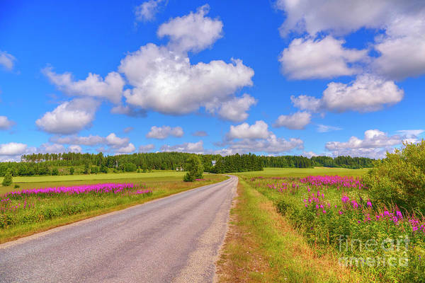 Fireweed Photograph - Mid-summer 2 by Veikko Suikkanen