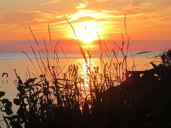 Middle Bass Island Photograph - Middle Bass Sunset Through Grass by Monica Donaldson Stewart