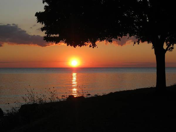 Middle Bass Island Photograph - Middle Bass Sunset Under Tree by Monica Donaldson Stewart