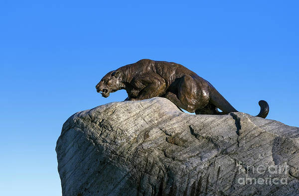 Wall Art - Photograph - Middlebury Colleg Panther by John Greim