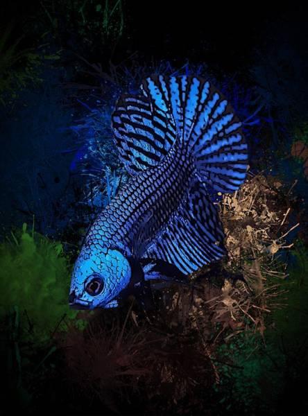 Digital Art - Midnight Blue Neon Betta by Scott Wallace Digital Designs