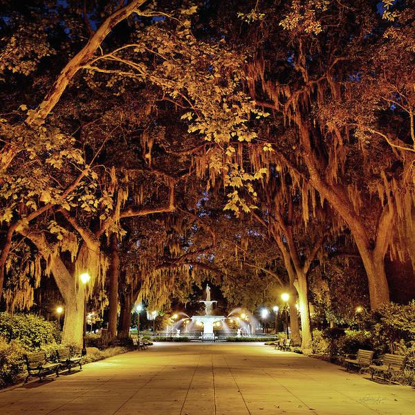 Photograph - Midnight In The Garden by Renee Sullivan