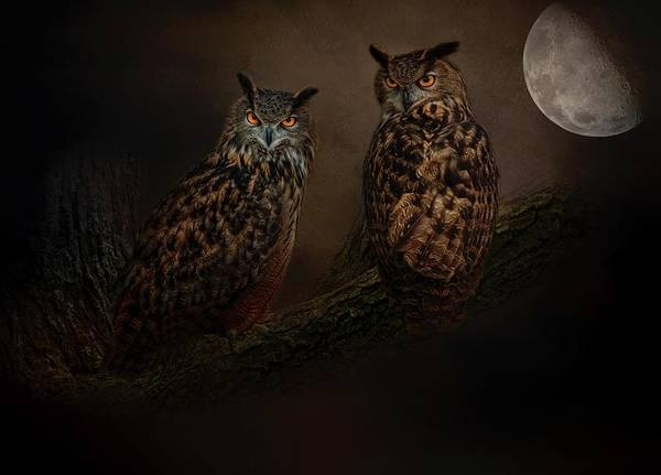 Photograph - Midnight Rendezvous  by Kelley Parker