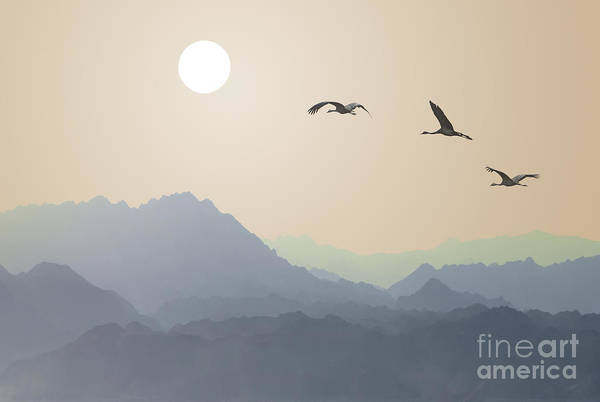 Aspiration Wall Art - Photograph - Migrating Cranes To The Sun Over The by Protasov An