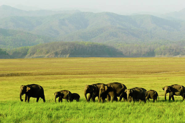 In The Grass Photograph - Migration Time In Corbett by The Wild Side By Nachiketa Bajaj