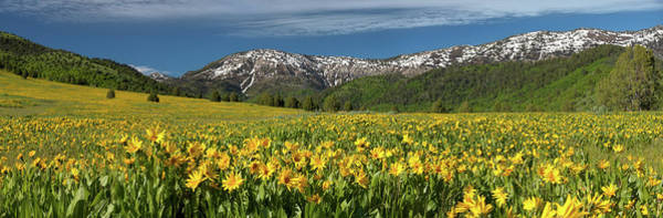Photograph - Miles Of Yellow by Leland D Howard