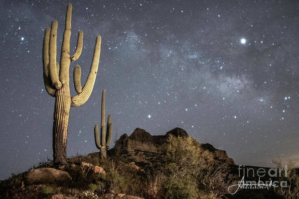 Wall Art - Photograph - Milky Way At Picket Post by Ann Loyd