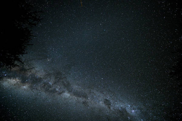 Wall Art - Photograph - Milky Way With Treetop In Namibia by Wolfgang steiner