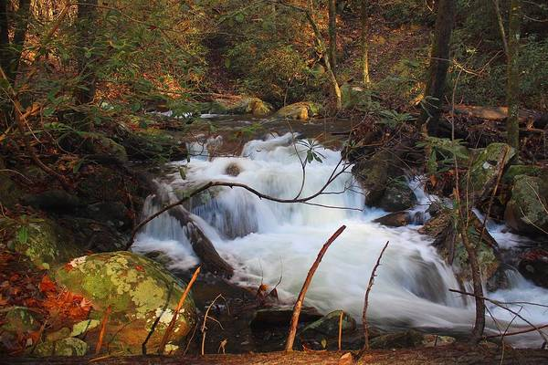 Photograph - Mill Creek Cascades by Richard Parks