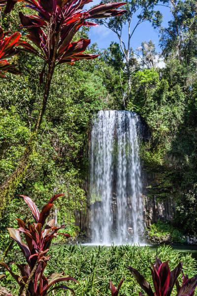 Atherton Tablelands Photograph - Milla Milla Falls by Manfred Gottschalk