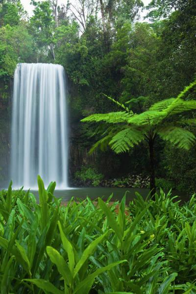 Atherton Tablelands Photograph - Millaa Millaa Falls by Andrew Watson