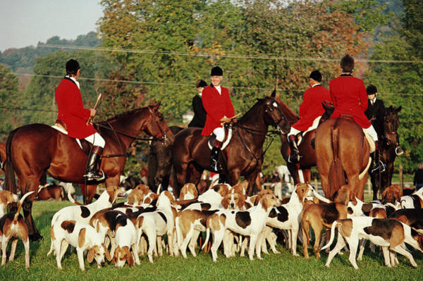 Domestic Animals Photograph - Millbrook Hunt by Slim Aarons