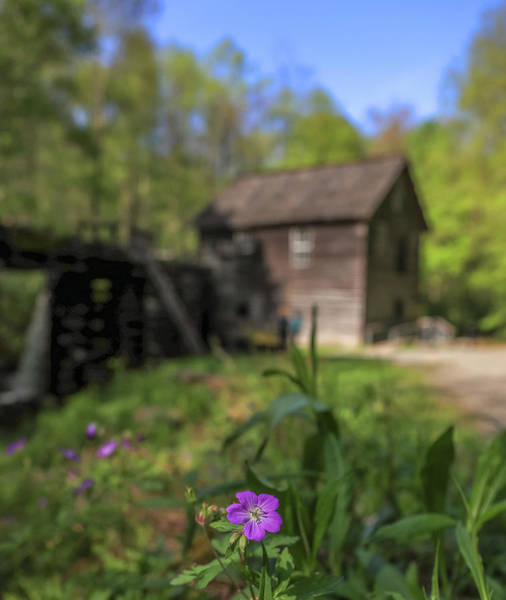 Photograph - Mingus Mill Spring Flowers by Dan Sproul