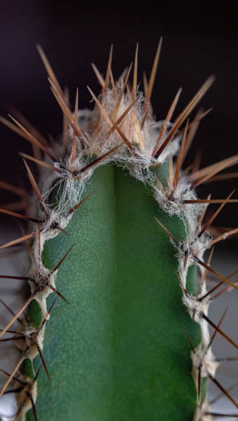 Mini Cactus Up Close Art Print