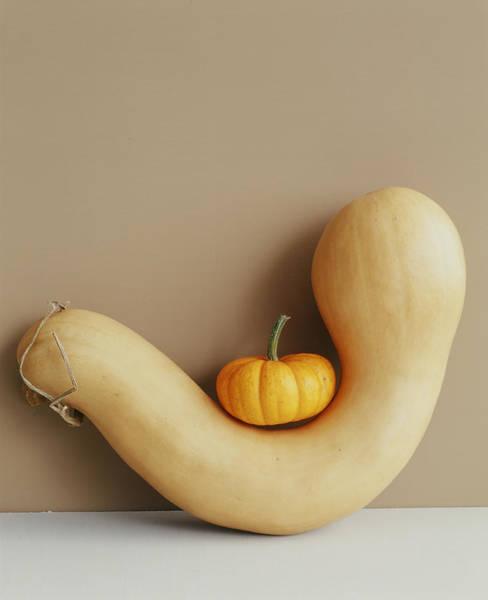 Gourd Photograph - Mini Pumpkin Sitting On A Gourd by Victoria Pearson
