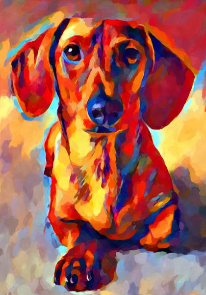 Wall Art - Painting - Miniature Dachshund 2 by Chris Butler