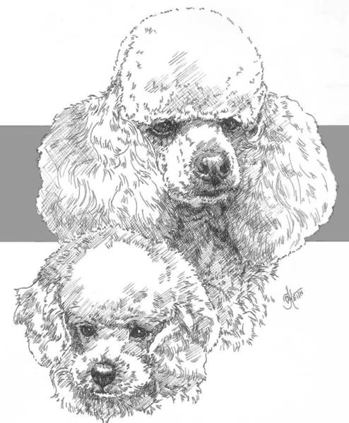 Drawing - Miniature Poodle And Pup by Barbara Keith