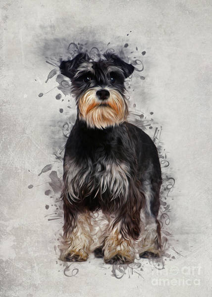 Furry Digital Art - Miniature Schnauzer by Ian Mitchell