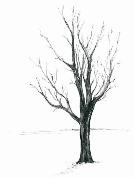 Drawing - Minimal Winter Maple Tree by MM Anderson