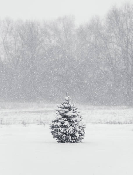 Photograph - Minimal Winter Scene by Dan Sproul