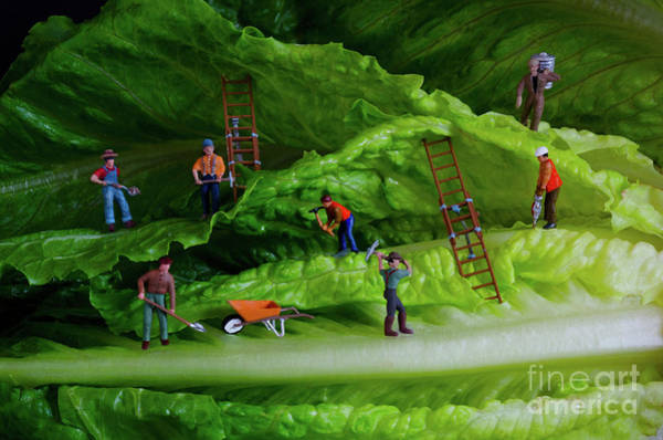 Wall Art - Photograph - Mining For The Future by Bob Christopher