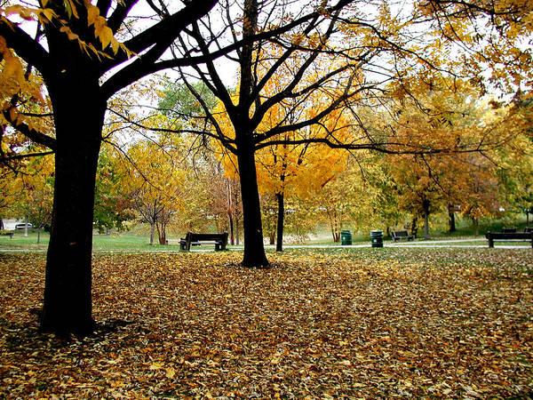 Fallen Leaf Lake Photograph - Minneapolis Park In Late Autumn by Akaplummer