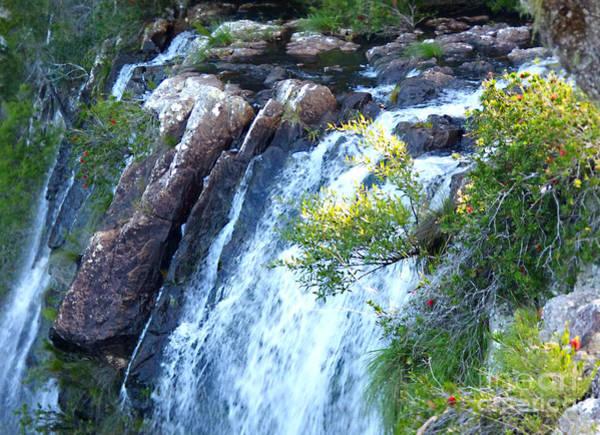Staghorn Fern Photograph - Minyan Falls #2 by Trudee Hunter