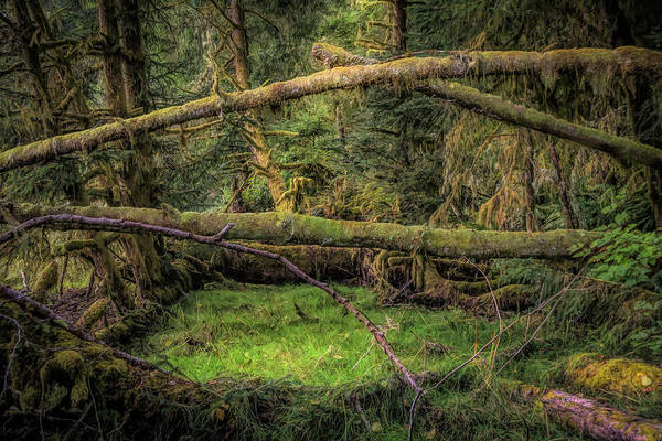 Photograph - Mirkwood Forest by Bill Posner