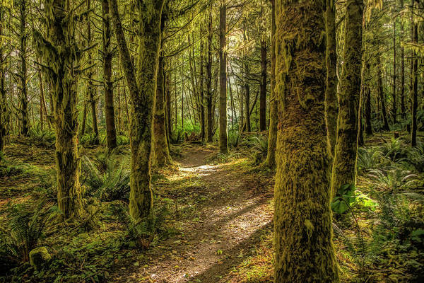 Photograph - Mirkwood Path by Bill Posner