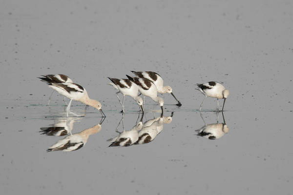 Photograph - Mirror Image by Donald Brown