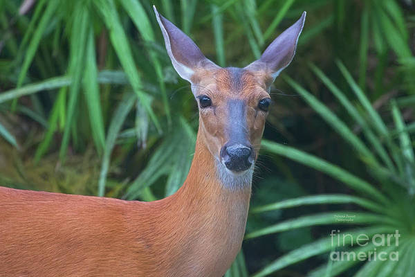 Wall Art - Photograph - Miss Backyard Doe by Deborah Benoit