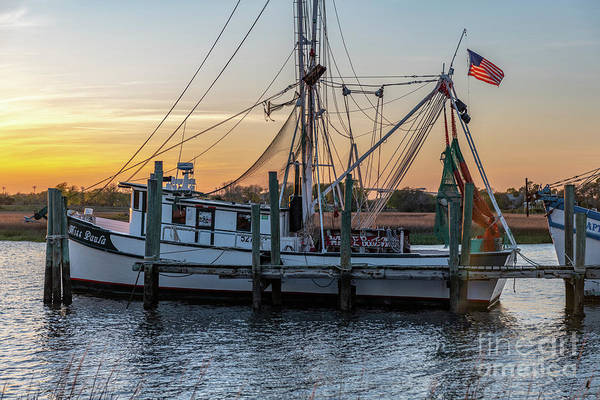 Photograph - Miss Paula At Sunset by Dale Powell