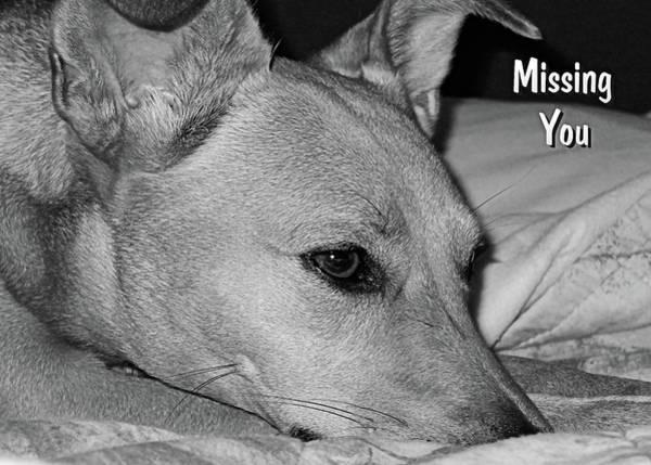 Photograph - Missing You by Kathy K McClellan