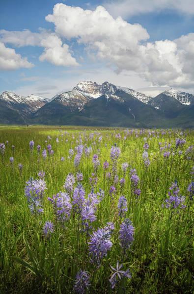 Photograph - Mission Mountains / Ronan, Montana  by Nicholas Parker