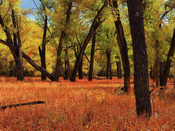 Wall Art - Photograph - Missouri Rivebank Autumn by Leland D Howard