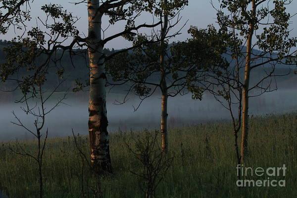Photograph - Mist by Ann E Robson