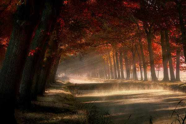 Photograph - Misty Land by Kees Van Dongen