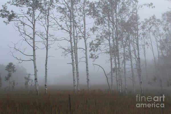 Photograph - Mist On The Meadow by Ann E Robson