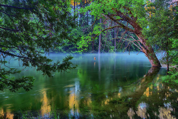 Photograph - Mist On The Merced by Greg Norrell