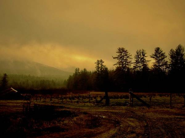 Wall Art - Photograph - Mist Rising by Elizabeth Tillar