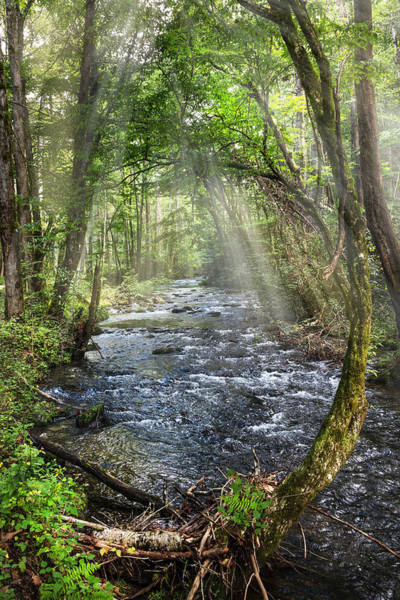 Wall Art - Photograph - Mists On The Mountain Rapids by Debra and Dave Vanderlaan