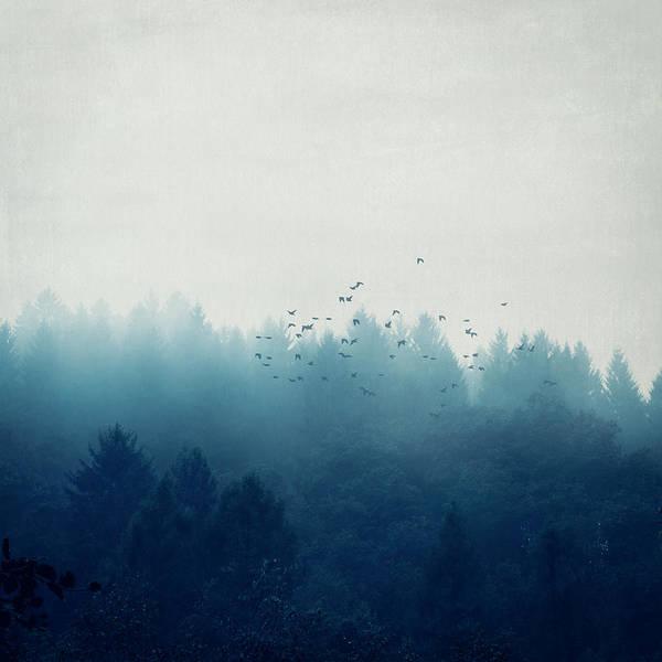 Photograph - Misty Blue Forest by Dirk Wuestenhagen