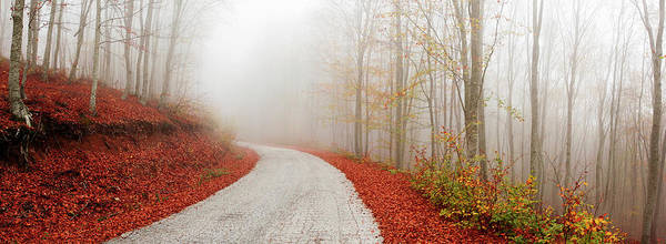 Wall Art - Photograph - Misty Colorful Road by Mavroudakis Fotis Photography