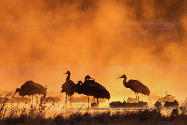 The Crane Photograph - Misty Cranes by Mallardg500