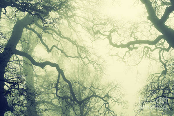 Wall Art - Photograph - Misty English Oaks by Tim Gainey