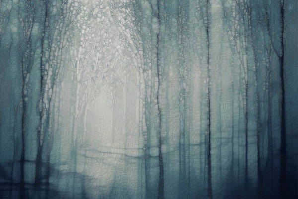 Wall Art - Painting - Misty Forest by Jack Zulli