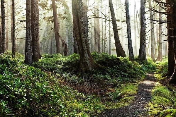 Woodland Photograph - Misty Forest Landscape by Andipantz